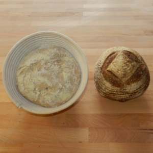 Introduction to sourdough